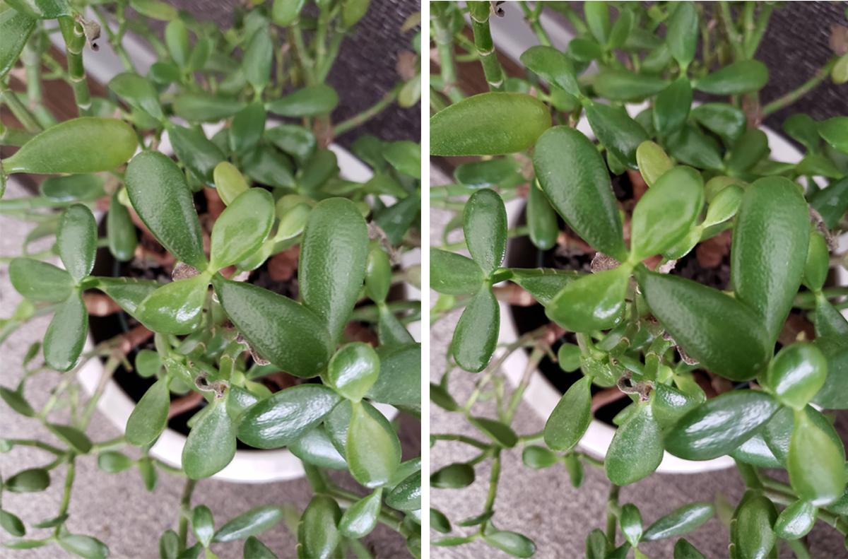 갤럭시 노트9의 장면 최적화 모드(오른쪽)에서 자동 모드(왼쪽)보다 미세하고 자연스러운 색감을 표현할 수 있었다. (클릭해서 원본확인 가능)