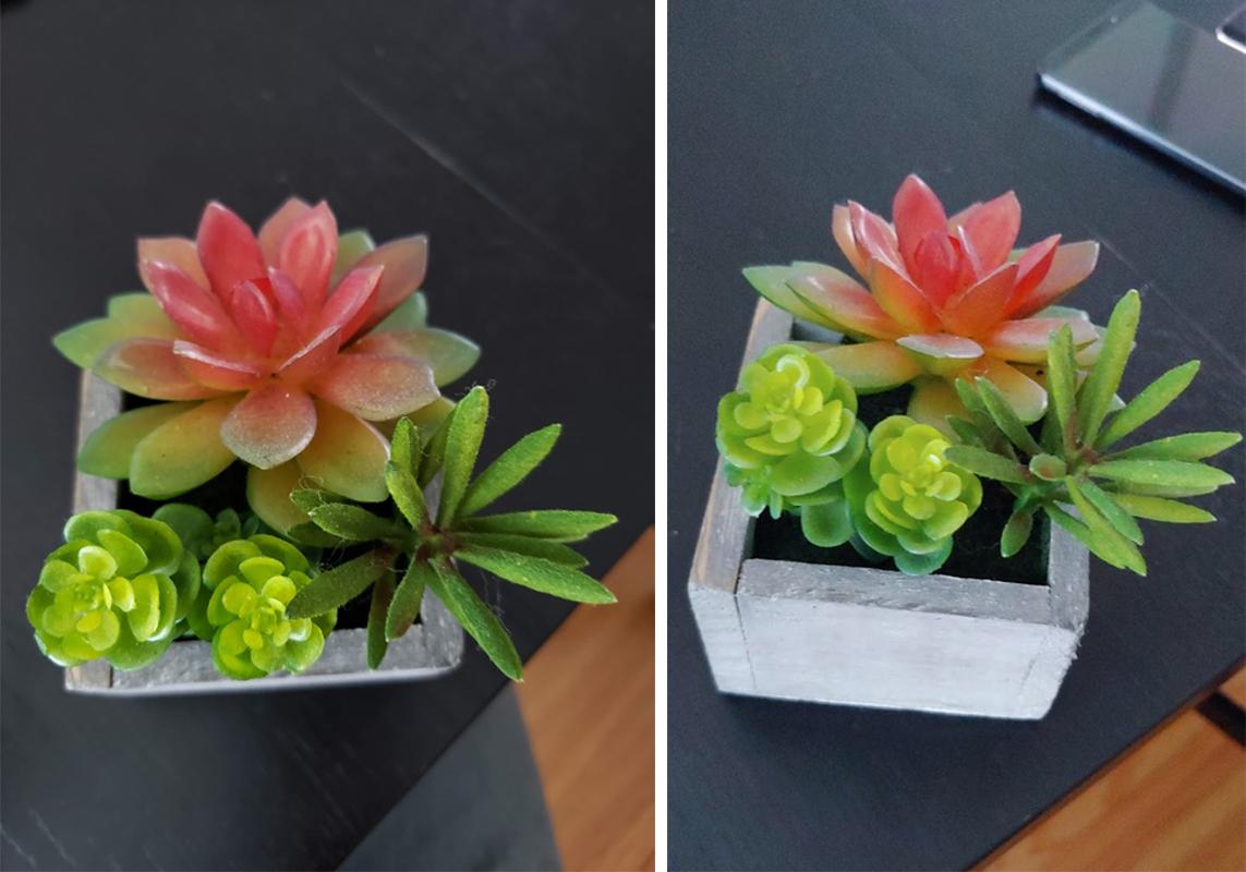 G7(오른쪽)은 갤럭시 노트9(왼쪽)보다 잎과 꽃의 세밀함을 잘 포착하지 못한다.(클릭해서 원본확인 가능)